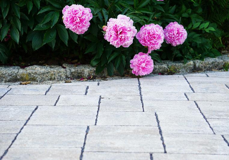 gartenbau, nürnberg, rosa blumen